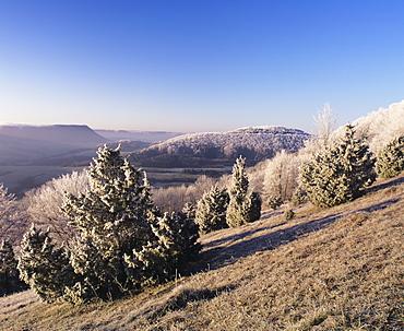 Juniper, winter morning, Kaltes Feld, Wissgoldingen, Swabian Alb, Baden Wurttemberg, Germany, Europe