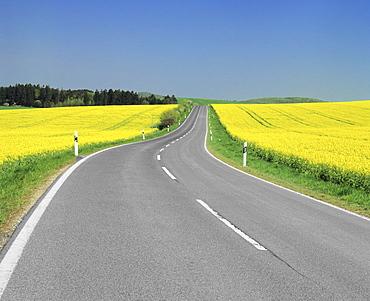 Road through rape fields in spring, Swabian Alb, Baden Wurttemberg, Germany, Europe