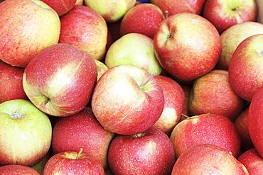 Apples at a market stall, weekly market, market place, Esslingen, Baden Wurttemberg, Germany, Europecurves adjustments for more contrast