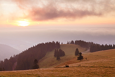 Early morning fog and sunrise, Belchen Mountain, Black Forest, Baden Wurttemberg, Germany, Europe