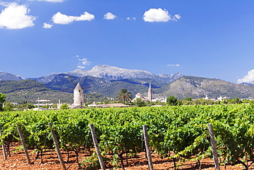 Windmill and church, vineyards, Binissalem, Serra de Tramuntana, UNESCO World Heritage, Majorca (Mallorca), Balearic Islands, Spain, Mediterranean, Europe