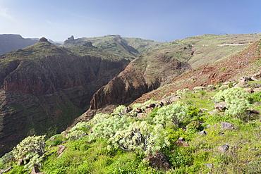 Barranco de Vera Valley, Roque del Sombrero Mountain, near San Sebastian, La Gomera, Canary Islands, Spain, Europe