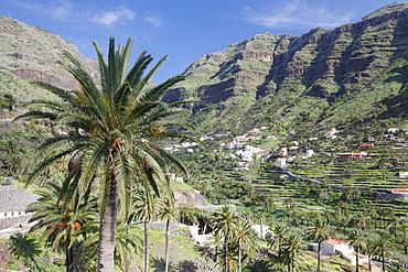 Terraced fields, Valle Gran Rey, La Gomera, Canary Islands, Spain, Europe