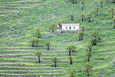 Finca, palm grove, near Alajero, La Gomera, Canary Islands, Spain, Europe