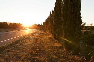 Alley of cypresses along a road at sunset, Gordes, Provence, Provence-Alpes-Cote d'Azur, France, Europe