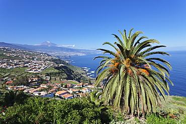 View over Orotava Valley to the north coast and Puerto de la Cruz und den Teide, Tenerife, Canary Islands, Spain, Atlantic, Europe