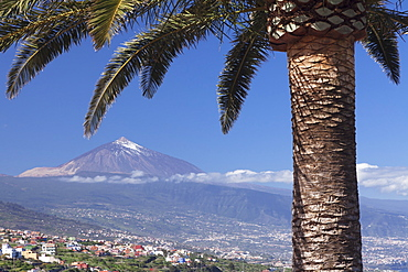 View over Orotava Valley to Pico del Teide, Tenerife, Canary Islands, Spain, Europe