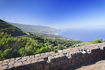 View from Mirador de la Tosca over the north coast, Canarian dragon tree (Dracaena draco), Barlovento, La Palma, Canary Islands, Spain, Atlantic, Europe