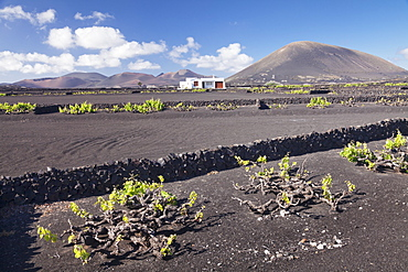 Finca, wine growing district La Geria, Lanzarote, Canary Islands, Spain, Atlantic, Europe