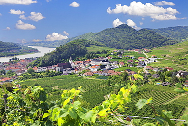 Vineyards in summer, Danube River, Spitz, Cultural Landscape Wachau, UNESCO World Heritage Site, Austria, Europe