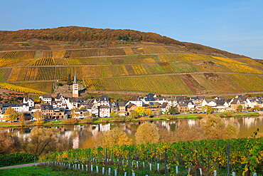 View of Merl district, Moselle Valley, Zell an der Mosel, Rhineland-Palatinate, Germany, Europe