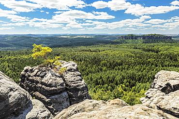 Blick vom Gohrisch, 440m, to Koenigstein Fortress, Elbsandstein Mountains, Saxony Switzerland National Park, Saxony, Germany, Europe