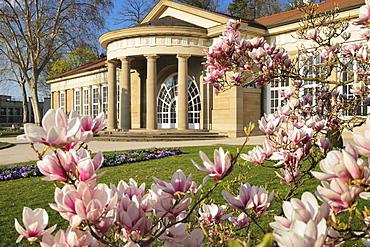 Magnolia blossom at Kurhaus, Bad Cannstatt, Stuttgart, Baden-Wurttemberg, Germany, Europe