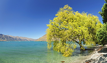At the shore of Lake Wakatipu, Queenstown, Otago, South Island, New Zealand, Pacific