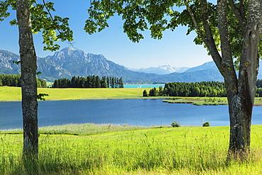 View over Forggensee lake to Tannheimer Alps, Fussen, Allgau, Schwaben, Bavaria, Germany, Europe