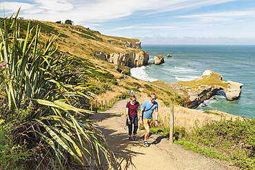 Hiking path to Tunnel Beach, Dunedin, Otago, South Island, New Zealand, Pacific