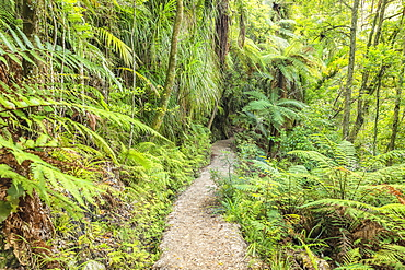 Wainui Falls Track, Golden Bay, Tasman, South Island, New Zealand, Pacific