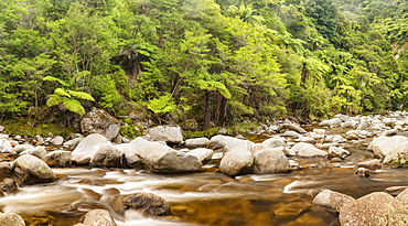 Wainui River, Wainui Falls Track, Golden Bay, Tasman, South Island, New Zealand, Pacific