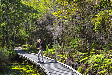 Hiking track to Te Waikoropupu Springs, Golden Bay, Tasman, South Island, New Zealand, Pacific