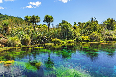 Te Waikoropupu Springs (Pupu Springs), Spring sacred to the Maoris, Golden Bay, Tasman, South Island, New Zealand, Pacific