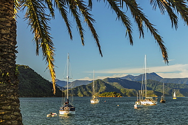 Sailing boats at the harbour of Picton, Marlborough Sounds, South Island, New Zealand, Pacific