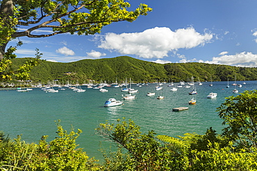 Marina at Waikawa, Picton, Marlborough Sounds, South Island, New Zealand, Pacific