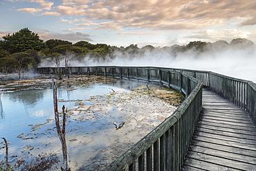 Kuirau Park, geothermics, Rotorua, Bay of Plenty, North Island, New Zealand, Pacific