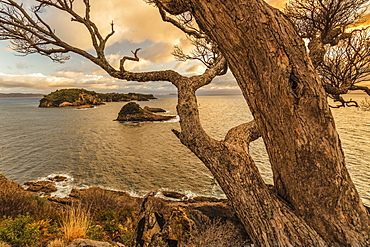 Tepare Point Reserve, Coromandel Peninsula, Waikato, North Island, New Zealand, Pacific