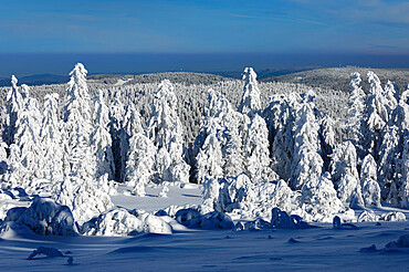 Hornisgrinde mountain in winter, Black Forest, Baden Wurttemberg, Germany, Europe