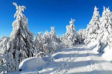 Hiking trail in winter, Hornisgrinde mountain, Black Forest, Baden Wurttemberg, Germany, Europe