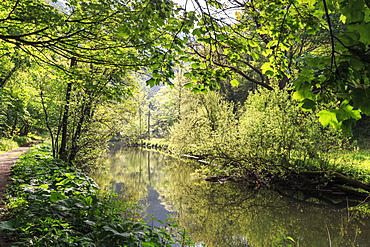 River Wye lined by trees in spring leaf with riverside track, reflections in calm water, Millers Dale, Peak District, Derbyshire, England, United Kingdom, Europe