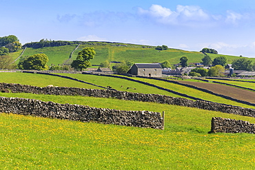 Typical spring landscape of village, cattle, fields, dry stone walls and hills, May, Litton, Peak District, Derbyshire, England, United Kingdom, Europe