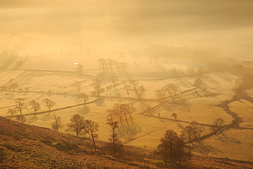 Misty and frosty sunrise over skeletal trees and fields dotted with sheep in winter, Castleton, Peak District, Derbyshire, England, United Kingdom, Europe