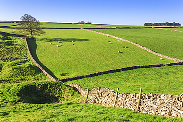 Sweeping landscape featuring dry stone walls in spring, Peak District National Park, near Litton, Derbyshire, England, United Kingdom, Europe