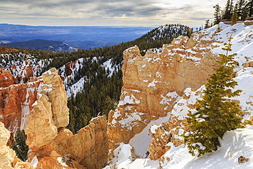 Rim edge, pine trees and snowy cliffs lit by morning sun with cloudy sky, Rainbow Point, Bryce Canyon National Park, Utah, United States of America, North America