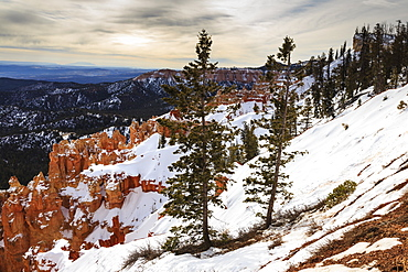 Weakly lit snowy rim, pine trees and hoodoos with cloudy sky, near Agua Canyon, Bryce Canyon National Park, Utah, United States of America, North America