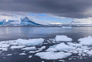 Icebergs and growlers off Cuverville Island, Errera Channel, Danco Coast, Antarctic Peninsula, Antarctica, Polar Regions