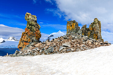 Chinstrap penguins (Pygoscelis antarcticus), bright lichen covered rocks, Half Moon Island, South Shetland Islands, Antarctica, Polar Regions