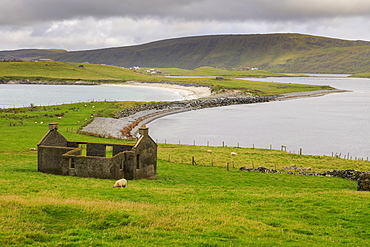 Minn Beach, ruined crofthouse, Banna Minn, tombolo, Papil, West Burra Island, view to East Burra, Shetland Isles, Scotland, United Kingdom, Europe
