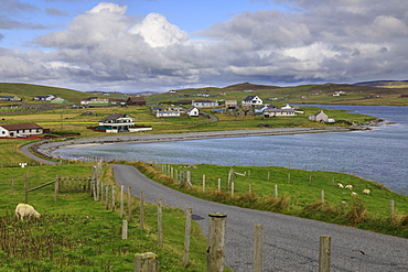 Papil, winding coastal road and village, sheep, West Burra Island, Shetland Isles, Scotland, United Kingdom, Europe