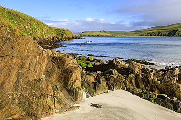 Scousburgh Sands, Spiggie Beach, white sand, turquoise sea, common seals on rocks, South Mainland, Shetland Isles, Scotland, United Kingdom, Europe