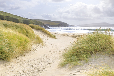 Fine white sand shell tombolo, dunes and grasses, beach, crashing waves, St. Ninian's Isle, Mainland, Shetland Isles, Scotland, United Kingdom, Europe
