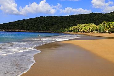 Tropical Anse de la Perle beach, palm trees, golden sand, blue sea, Death In Paradise location, Deshaies, Guadeloupe, Leeward Islands, West Indies, Caribbean, Central America