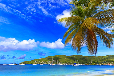 Quiet Caribbean, sea shore palm trees, beautiful Port Elizabeth, Admiralty Bay, Bequia, The Grenadines, St. Vincent and the Grenadines, Windward Islands, West Indies, Caribbean, Central America