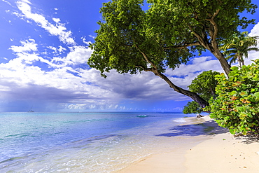 Paynes Bay, overhanging trees, fine pale pink sand beach, turquoise sea, beautiful West Coast, Barbados, Windward Islands, West Indies, Caribbean, Central America