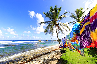 Bathsheba, colourful garments blow in the breeze, windswept palm trees, Atlantic waves, rugged East Coast, Barbados, Windward Islands, West Indies, Caribbean, Central America