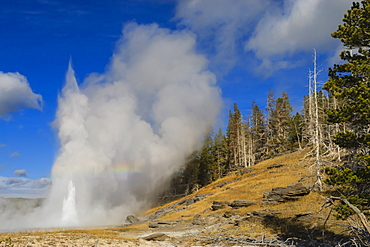 Grand Geyser erupts, forcing steam high into the air, Upper Geyser Basin, Yellowstone National Park, UNESCO World Heritage Site, Wyoming, United States of America, North America