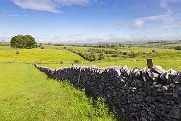 Dry stone wall, farmers' fields and a copse of trees, Limestone Way, Monyash, Peak District National Park, Derbyshire, England, United Kingdom, Europe