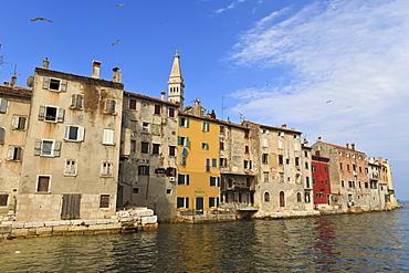 Soaring birds over the Old Town peninsula on a summer's early morning, Rovinj (Rovigno) peninsula, Istria, Croatia, Europe