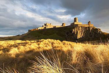 Bamburgh Castle and dune marram grass bathed in golden evening light, Bamburgh, Northumberland, England, United Kingdom, Europe